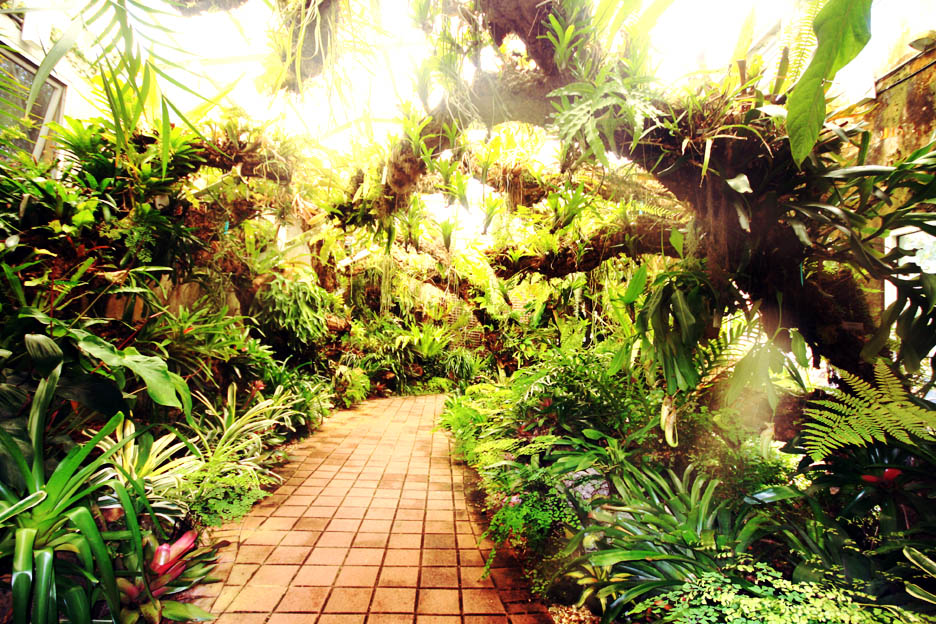 Fairchild Tropical Botanic Garden, Miami, FL Photo Copyright 2010 Steve Lucas, www.ExoticRainforest.com