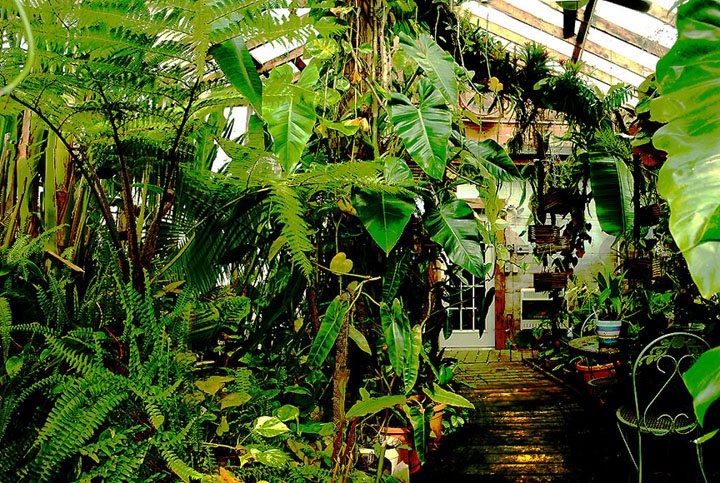 Exotic Rainforest atrium, Siloam Springs, AR, Photo Copyright 2009, Steve Lucas, www.ExoticRainforest.com