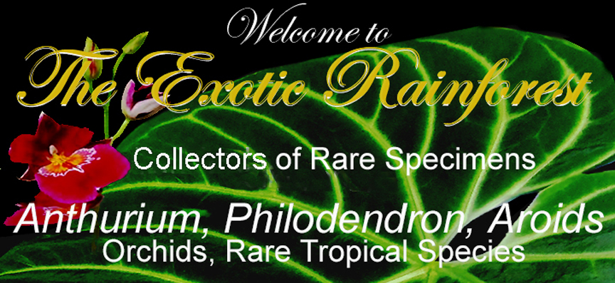 The ExoticRainforest banner, Created by and copyright 2009 Steve Lucas, www.ExoticRainforest.com Co