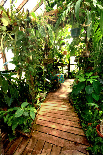 Main walk, The Exotic Rainforest atrium, Siloam Springs, AR, Photo Copyright 2009, Steve Lucas, www.ExoticRainforest.com