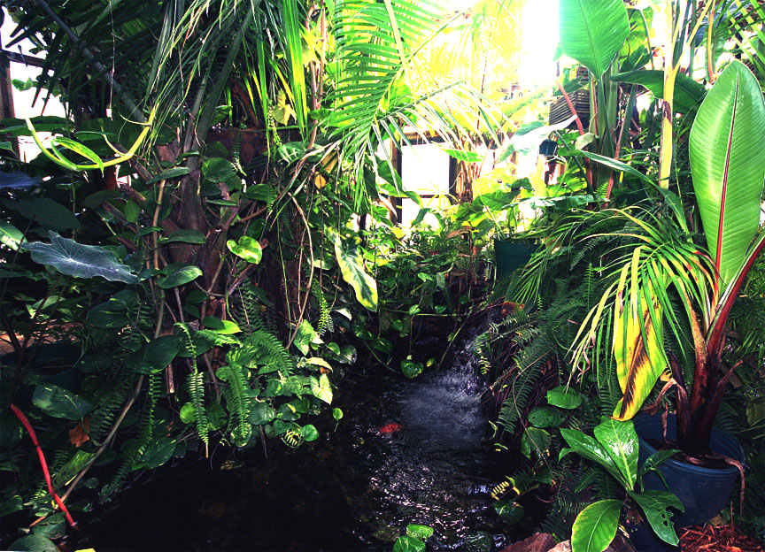 tropical  Waterfall and pond inside the Exotic Rainforest atrium, Siloam Springs, AR, Photo Copyright 2009 Steve Lucas, www.ExoticRainforest.com